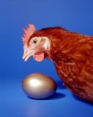 Gallia de Huevos de Oro